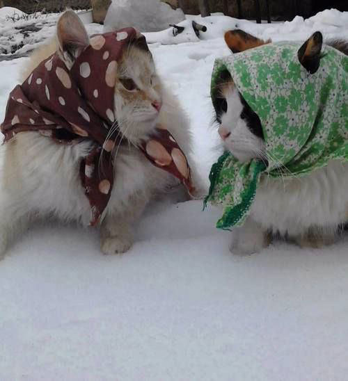 it is particularly cold in russia this year, cats wearing scarves