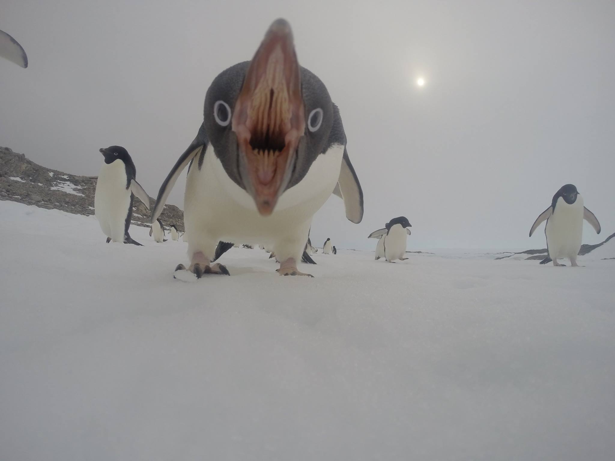 penguins like you've never seen them before, scary as hell