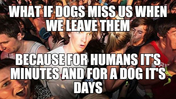 what if dogs miss us when we leave them because for humans it's minutes and for a dog it's days, sudden clarity clearance, meme
