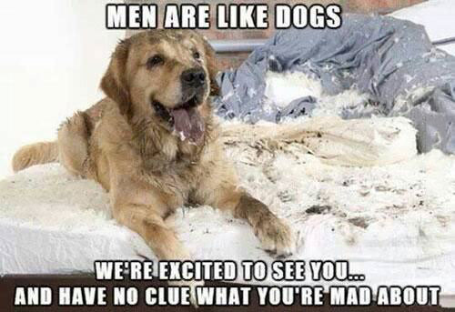 men are like dogs, we're excited to see you and have no clue what you're mad about, meme