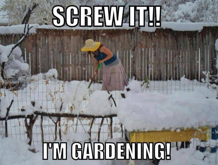 screw it i'm gardening, in the snow, meme, wtf