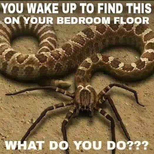 you wake up to find this on your bedroom floor, what do you do?, spider snake