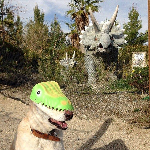 dog wearing a dinosaur mask