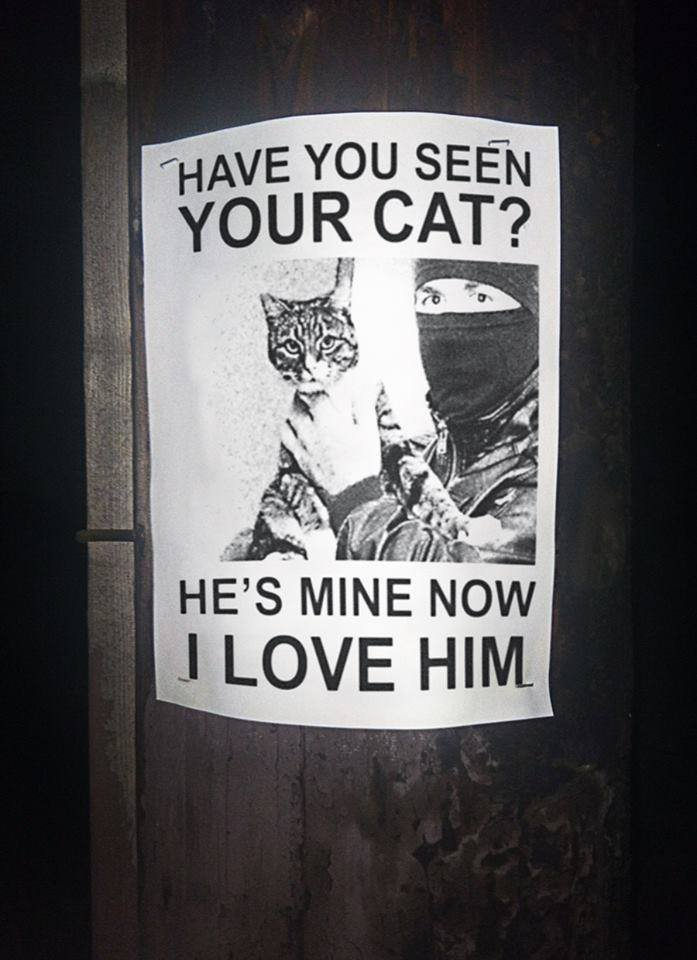 have you seen your cat?, he's mine now i love him