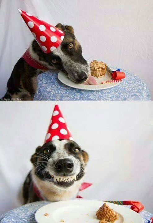 birthday dog is happy about his birthday meal