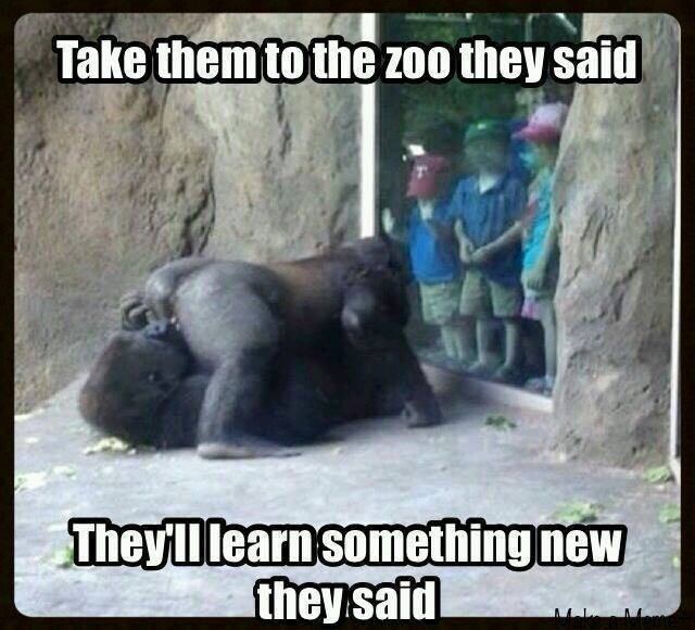 take them to the zoo they said, they'll learn something new they said