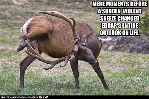 mere moments before a sudden violent sneeze changed edgar's entire outlook on life, buck scratching balls with antlers