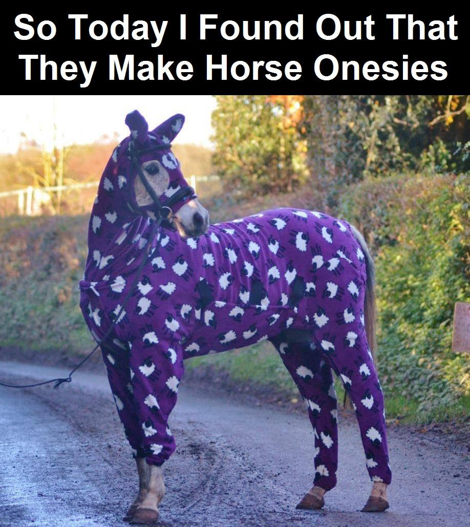 so today i found out that they make horse onesies