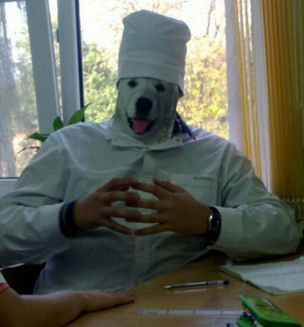 i have no idea what i'm cooking, dog in chef outfit
