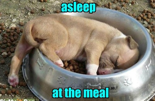 asleep at the meal, puppy sleeping in food dish