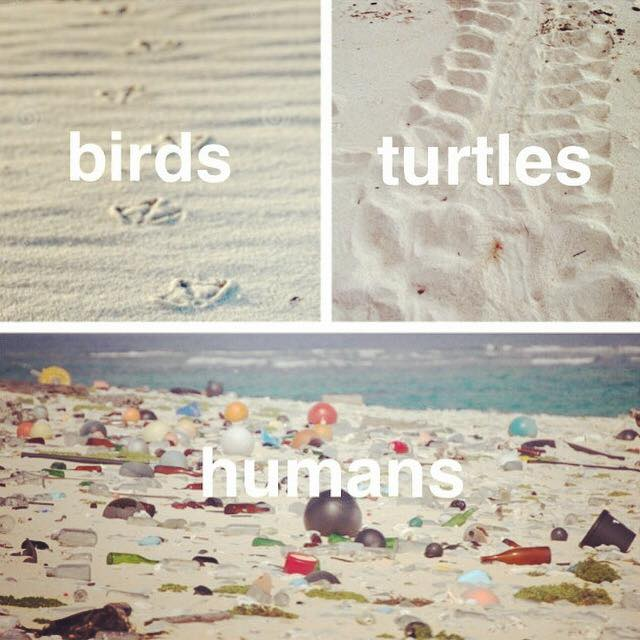 prints left behind in the sand by birds turtles and humans, pollution, beach