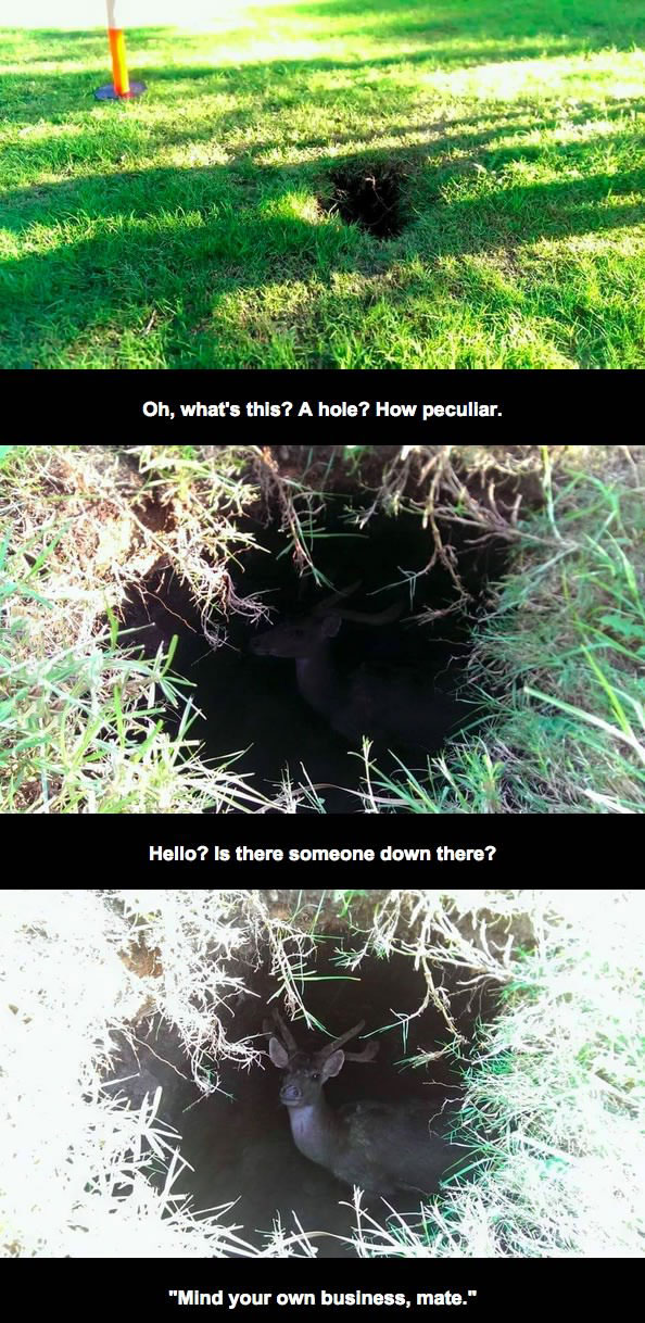the kinds of things you find inside holes in australia