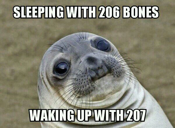 sleeping with 206 bones, waking up with 207, morning wood, awkward moment seal, meme