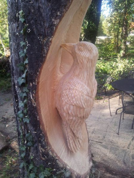 carving a wood pecker into a tree