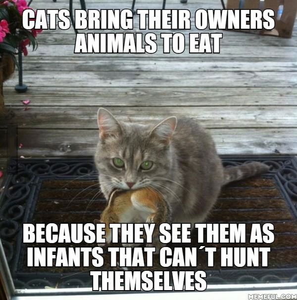 cats bring their owners animals to eat because they see them as infants that can't hunt themselves, meme