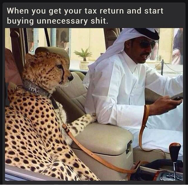 when you get your tax return and start buying unnecessary shit, leopard in car in saudi arabia
