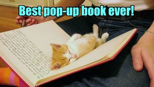 best pop up book ever, kitten sleeping in book