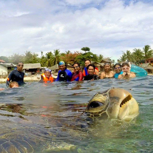 stoned turtle photobombs group