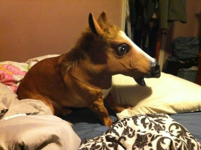 horse mask on short dog
