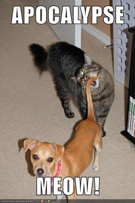apocalypse meow, cat about to bite dog's tail, meme