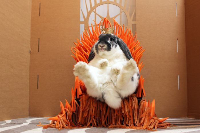 bunny rabbit on throne of carrots got style