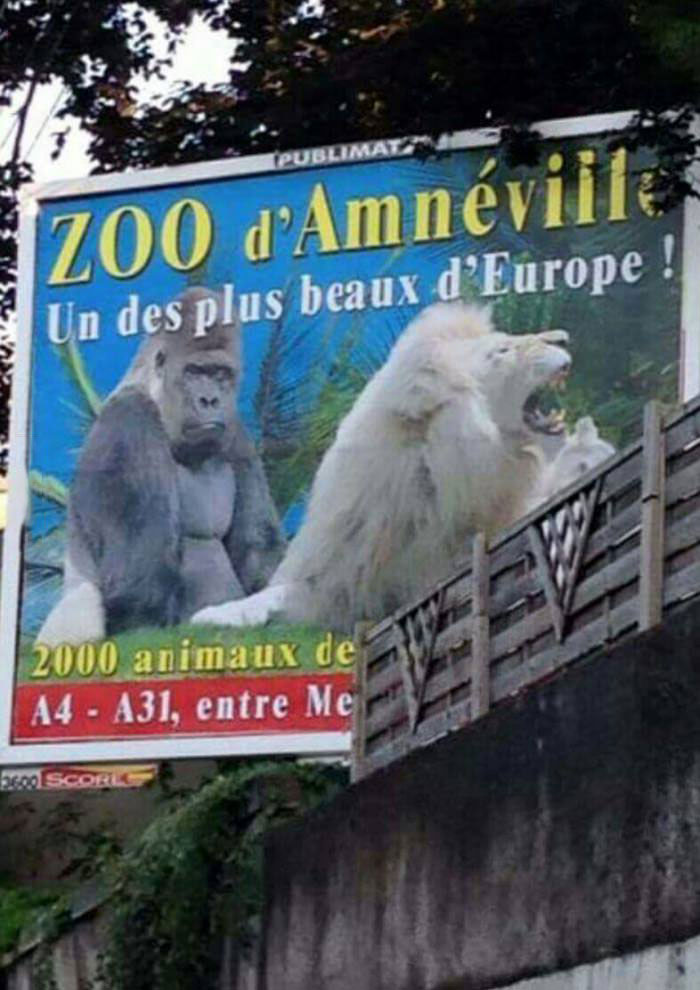 exactly what kind of zoo is this?, zoo billboard with awkward animal placement