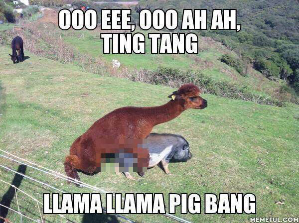 ooo eee, ooo ah ah, ting tang llama llama pig bang, meme