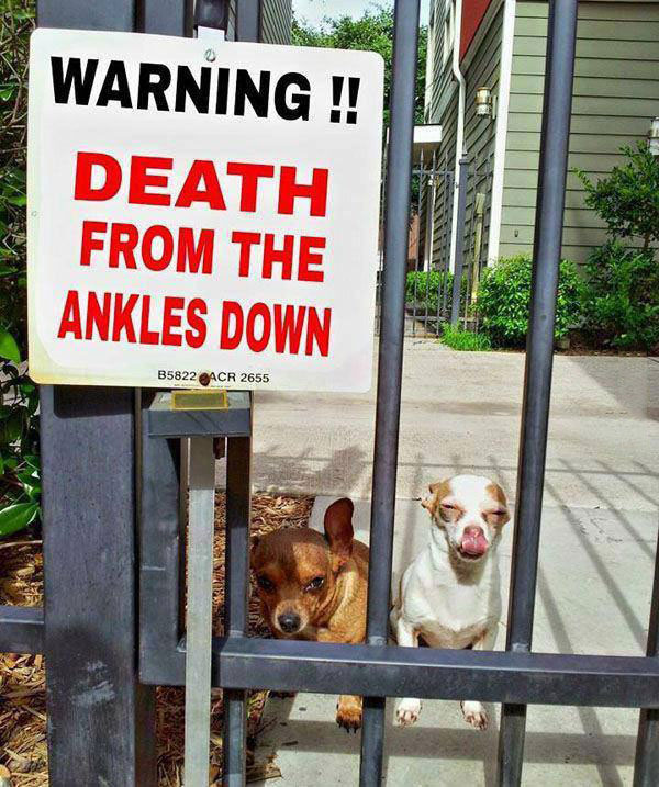 warning !! death from the ankles down, little dogs, sign