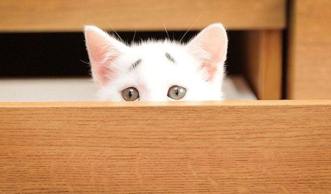 concerned kitten is stalking but concerned