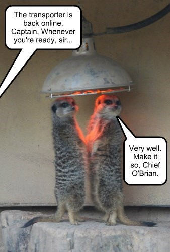 the transporter is back online captain, veyr well make it so chief o-brian, meerkats warming up together