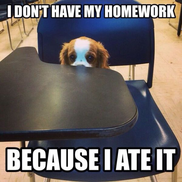 i don't have my homework because i ate it, puppy on a desk, meme