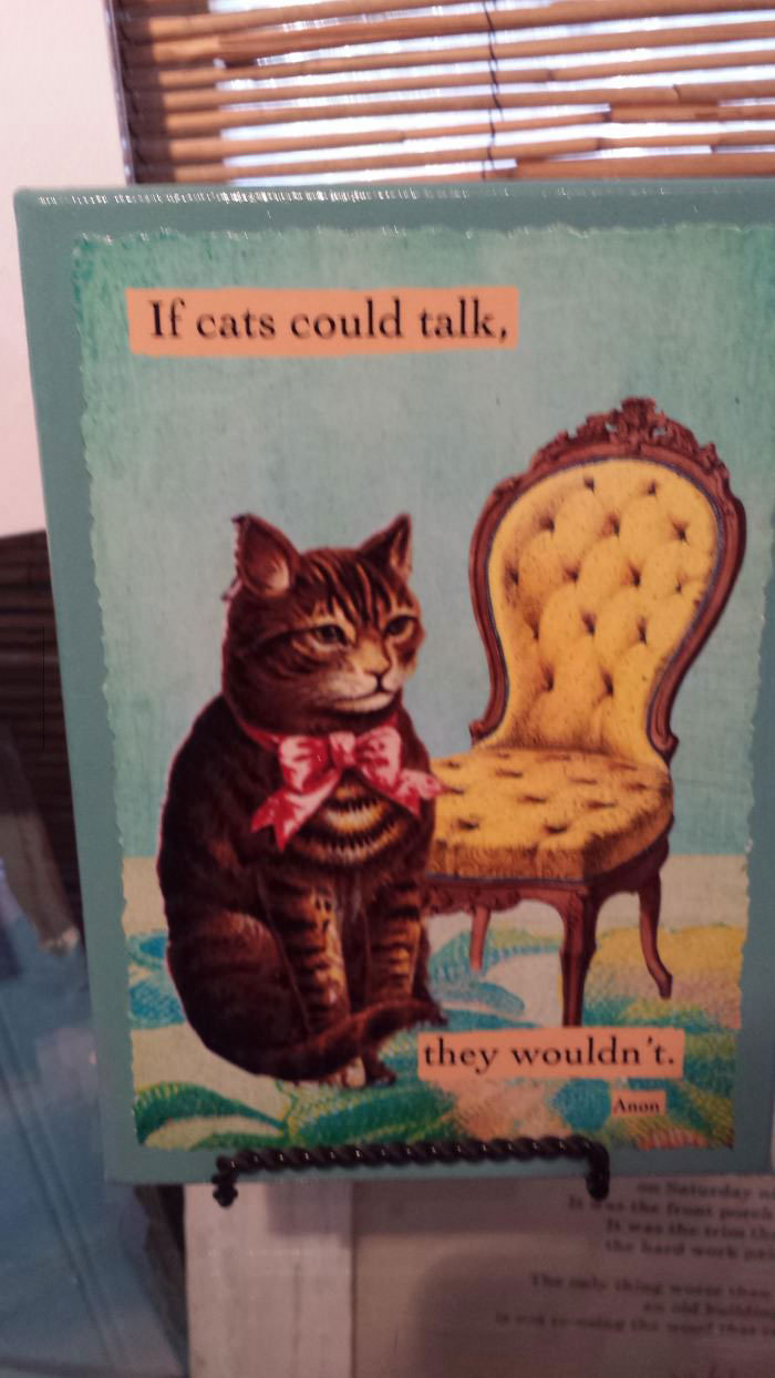 if cats could talk, they wouldn't