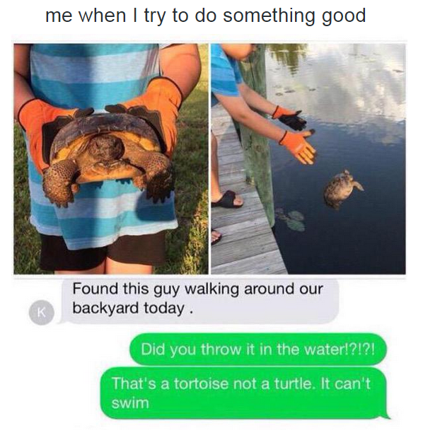 me when i try to do something good, that's a tortoise not a turtle he can't swim