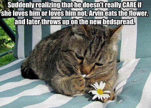 suddenly realizing that he doesn't really care if she loves him or loves him not, arvin eats the flower and later throws up on the new bedspread, cat, meme