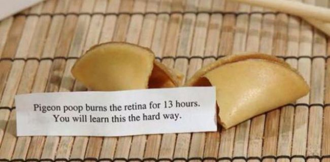 pigeon poop burns the retina for 13 hours, you will learn this the hard way, fortune cookie, wtf, lol