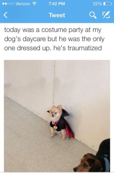 today was a costume part at my dog's daycare but he was the only one dressed up, he's traumatized