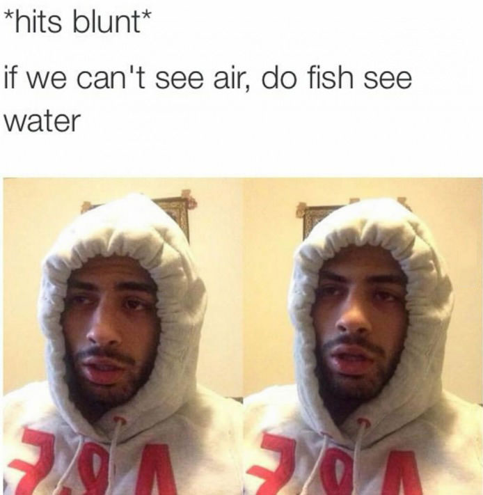if we can't see air, do fish see water, hits blunt