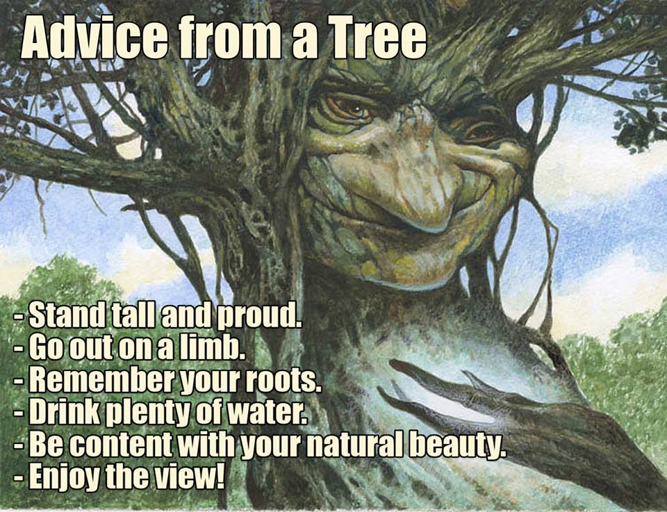 advice from a tree, stand tall and proud, go out on a limb, remember your roots, drink plenty of water, be content with your natural beauty, enjoy the view