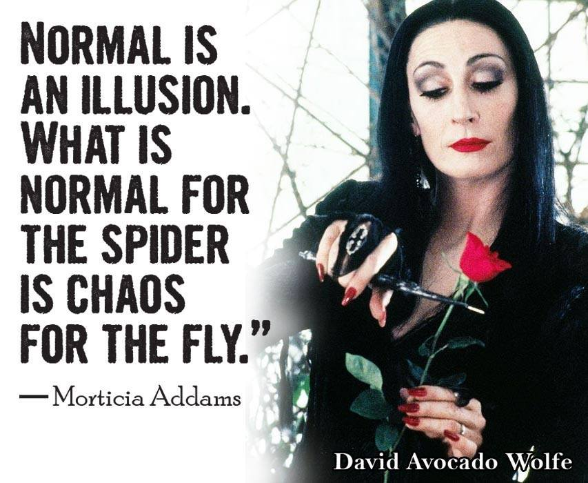 normal is an illusion, what is normal for the spider is chaos for the fly