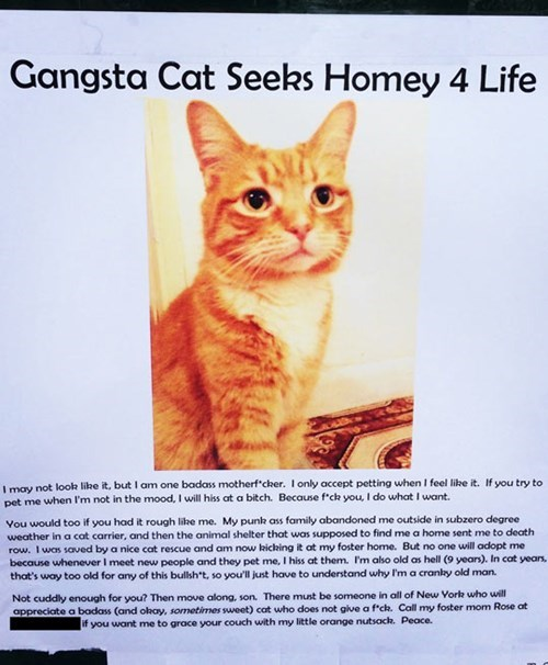 gangsta cat seeks homey for life