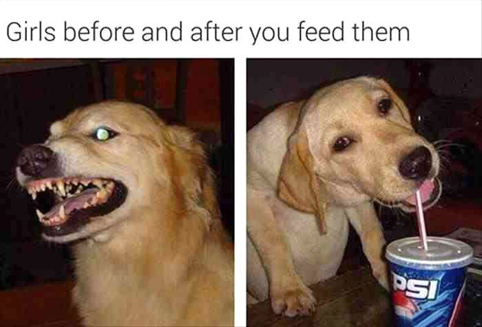 girls before and after you feed them, angry dog, happy dog