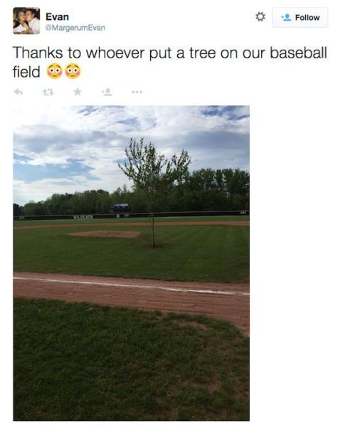 thanks to whoever put a tree on our baseball field