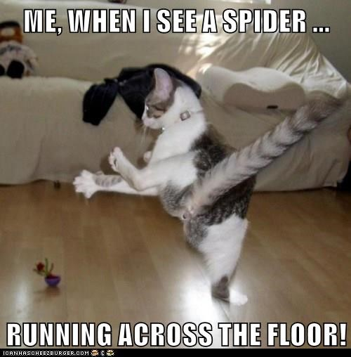 me when i see a spider running across the floor, cat freaking out, meme