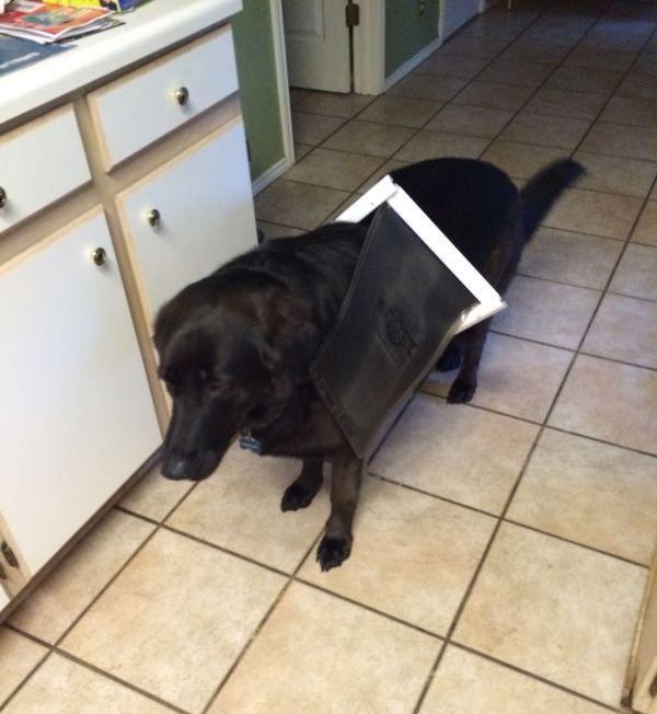 dog gets stuck in dog door