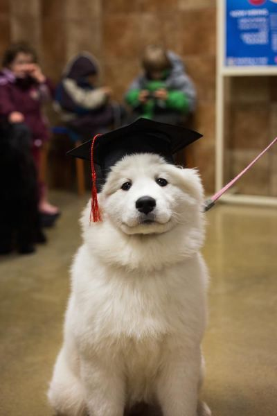recent graduates these days, i have no idea what i'm doing, dog wearing graduation hat
