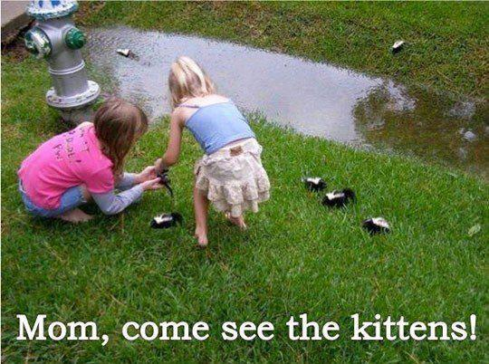 mom come see the kittens, two little girls playing with baby skunks