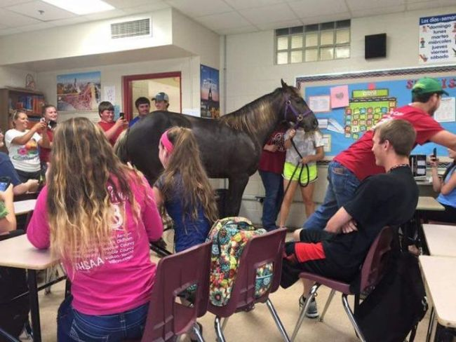 when the teacher says to quit horsing around and means it, horse in a classroom