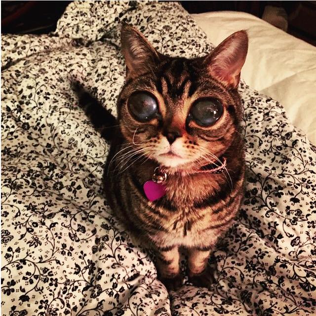 so apparently this is a real cat with giant eyes