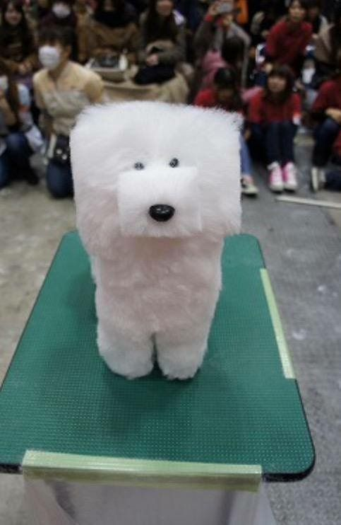 white dog with square hair cut, wtf