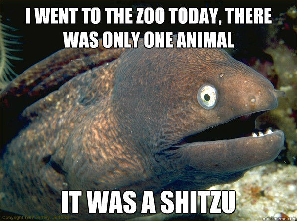 i went to the zoo today, there was only one animal, it was a shitzu, bad joke eel, meme
